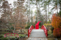 Durham-Maternity-photographer-at-Duke-Gardens-in-the-late-fall